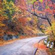 Road in autumn wood. — Stock Photo