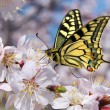 Stock Photo: Butterfly and white flower