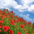 Poppies hill and sunny sky.  — Stock Photo