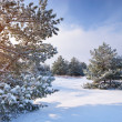 Winter landscape — Stock Photo #18765997