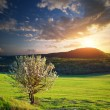 Stock Photo: Tree in mountain meadow