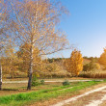 Autumn birch in park — Stock Photo