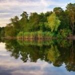 Река и Весенний лес — Стоковое фото