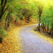 Road in autumn wood. — Stock Photo #18769257