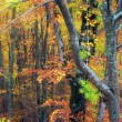 Autumn forest — Stock Photo #18769333