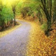 Road in autumn wood. — Stock Photo