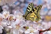 Mariposa y blanca flor — Foto de Stock