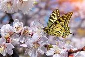 Motyl i biały kwiat. — Zdjęcie stockowe