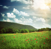 Beautiful landscape — Stock Photo