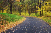 Road in autumn park. Nature composition. — Stock Photo