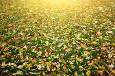 Autimn leafs textur — Stockfoto