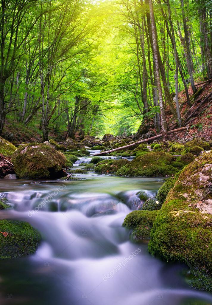 Фотообои Река в горном лесу.