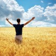 Man in meadow of wheat — Stock Photo