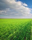 山の緑の牧草地 — ストック写真