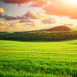 Green meadow in mountain — Stock Photo #26020149