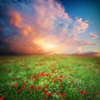 Stock Photo: Beautiful meadow