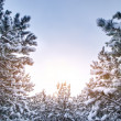 Snow branches — Stockfoto #26020341