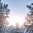 Snow branches — Stockfoto