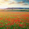 Big poppy meadow — Stock Photo #26020351