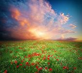 Beautiful meadow — Stock Photo