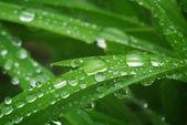 Yağmur damlası makro — Stok fotoğraf