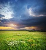 Dağ çayır — Stok fotoğraf