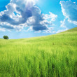 Stock Photo: Green meadow in mountain.
