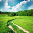 Lane in meadow — Stock Photo