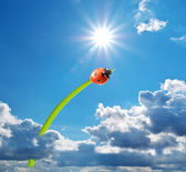Ladybug and big sun — Stock Photo