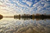 Floden och säv — Stockfoto