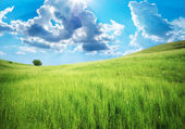 Green meadow in mountain. — Stock Photo