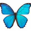 Butterfly morpho — Stock Photo #38598007