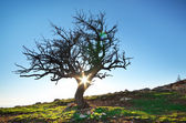 Eenzame boom — Stockfoto