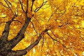 Under big tree. — Stock Photo