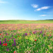 Spring flower meadow — Stock Photo #44052373