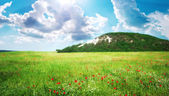 Prado verde en la montaña — Foto de Stock