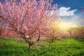 Spring garden. — Stock Photo