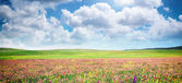 Spring flower meadow — Stock Photo