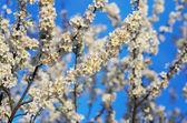 Albero di primavera — Foto Stock