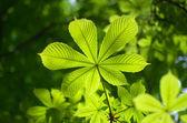 Jarní listí — Stock fotografie