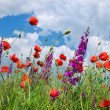 In poppies field — Stock Photo #47526035