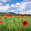 In poppies field. — Stock Photo #47526057