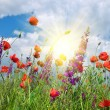 In poppies field — Stock Photo #48994543