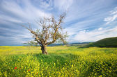 Old tree in spring meadow — Stock Photo
