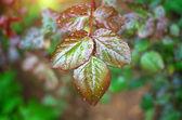 Dew on leaf — Stock Photo
