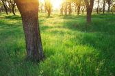 Park solljus. — Stockfoto