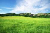 Prairie dans la montagne — Photo