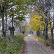 Rural road at autumn — Stock Photo