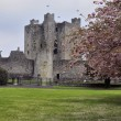 Stock Photo: Trim castle