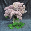 Stock Photo: Still life of lilac